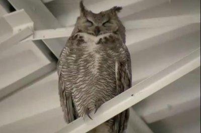 Owl Family Makes Home In Lowes Garden Center   UPI.com