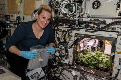 Printable steak, insect protein, fungus among NASA space food idea winners