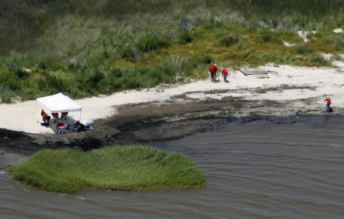 Dead, dying coral at gulf oil spill site
