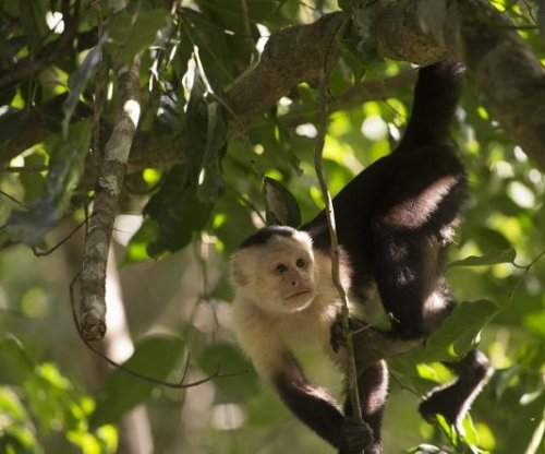 First North American monkey fossils recovered from Panama Canal excavation