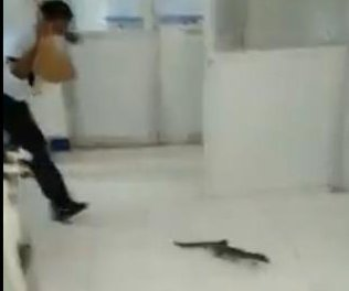 Wandering monitor lizard ejected from hospital in Philippines