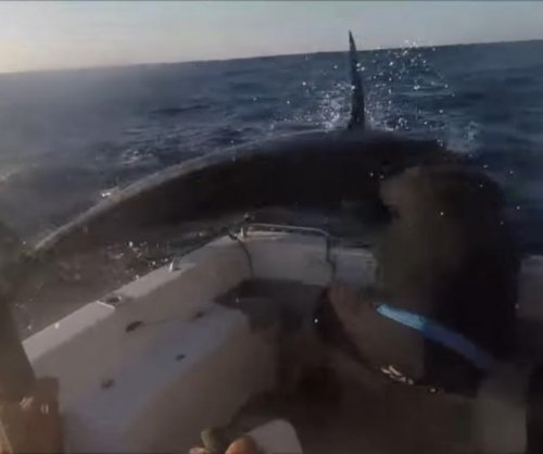 Marlin jumps over boat, nearly impales crew member