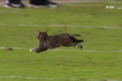Cat runs across field during Ravens-Dolphins game