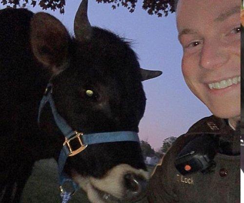 Indiana deputy wrangles loose bull, names it 'Mud Pie'