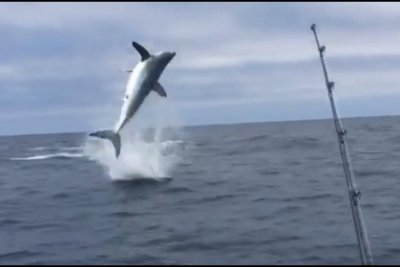 'Flying' mako shark performs series of jumps to free itself from hook