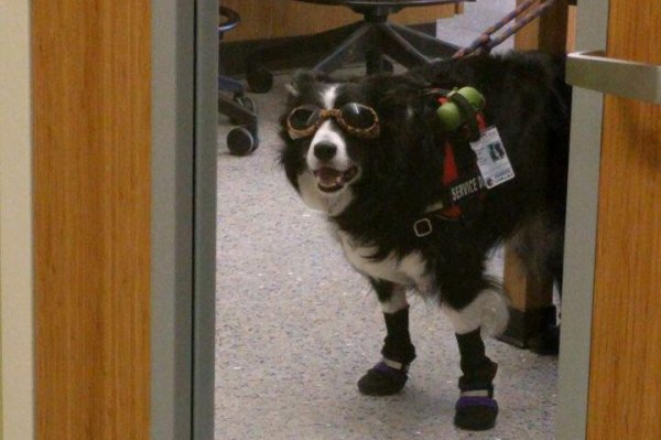 Look Dog In Chemistry Lab Wears Goggles Closed Toe