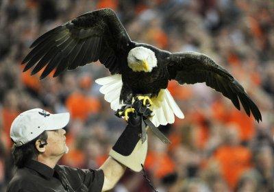Wind farm on hold over bald eagle concerns