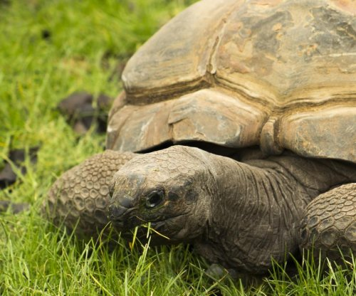 Early hunter-gatherers regularly ate tortoise
