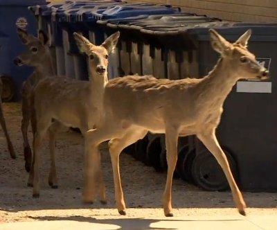 Herd of deer shooed away from downtown Winnipeg