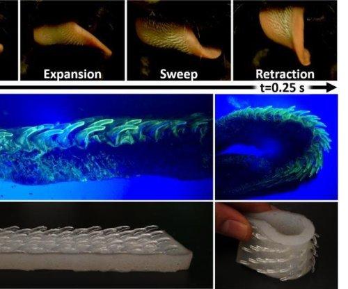 Study reveals the unique surface structures on a cat's tongue