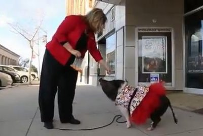 Iowa pig does 13 tricks in one minute for Guinness record