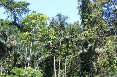 Report: Brazil's Amazon deforestation at 10-year high
