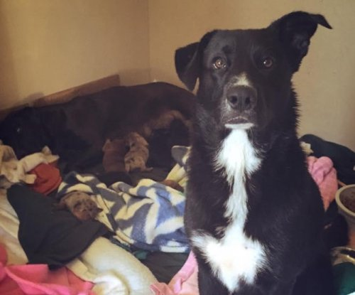 Dog dubbed 'Hero' after leading rescuers to 10 puppies and their mother