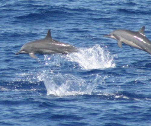 Feds propose ban on swimming with Hawaii's spinner dolphins
