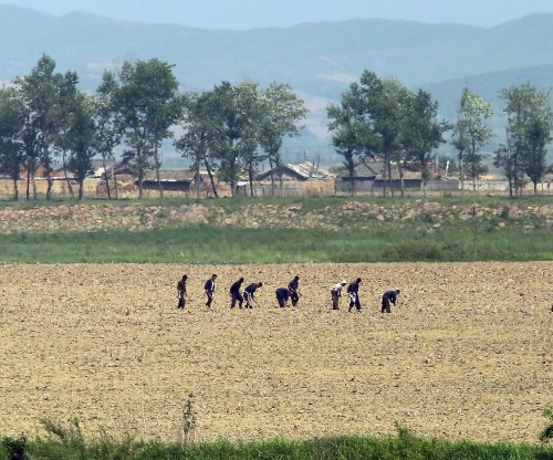 North Korea imports of Chinese grain decline 70 percent