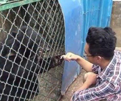 'Puppies' adopted by Chinese man turn out to be Asian black bears