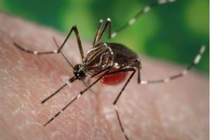 Health experts: Move, postpone Rio summer Olympics over Zika