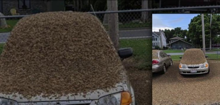 Watch: Mayflies invade northeastern Ohio - UPI com
