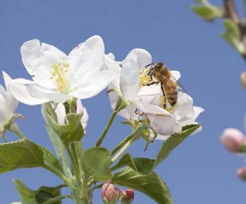 USDA: Annual bee losses total 42 percent