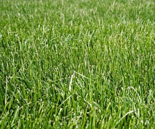 Sunlight helps scientists derive hydrogen from grass