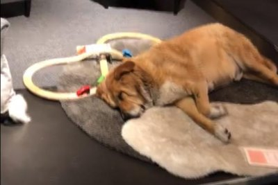 Watch Ikea Store Provides Living Room For Stray Dogs Upicom