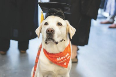 Virginia Tech gives honorary doctorate to service dog