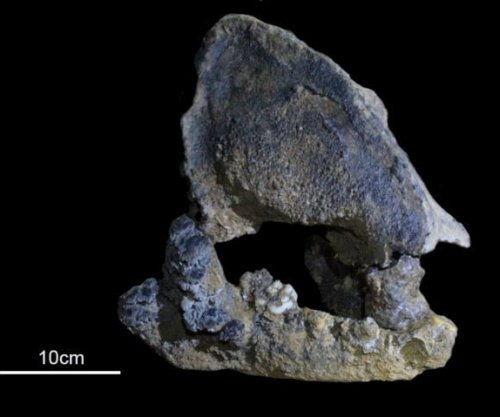 Ancient panda skull reveals new giant panda lineage
