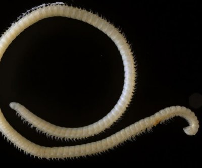 Researchers discover millipede with 414 legs