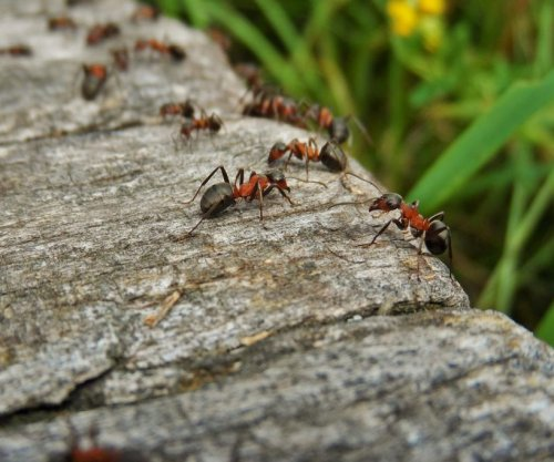 Facebook ant colony roleplaying group grows to 1.8M members amid pandemic