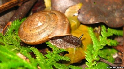 New snail species named for marriage equality