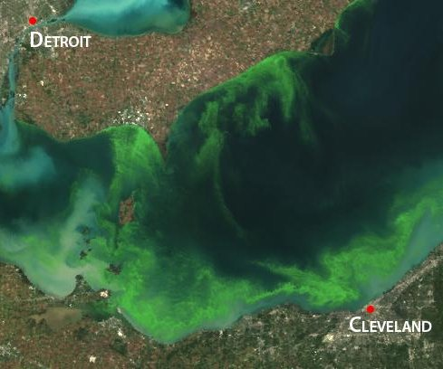 Scientists track fertilizer's effects on Ohio algae bloom