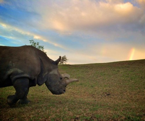Northern white rhino dies at San Diego Safari Park; only three others remain