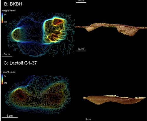 Hominins were walking like Homo sapiens earlier than scientists thought