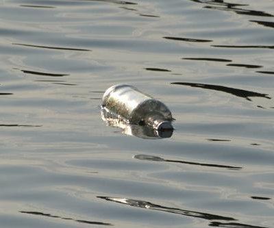 Scottish girls find 20-year-old message in a bottle on beach