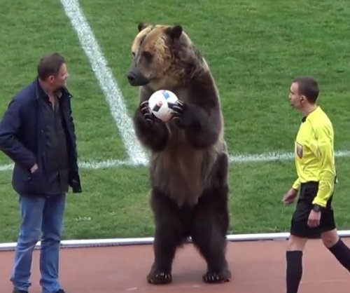 Bear hands ball to referee to begin Russian soccer game