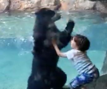 6e7b68703f9f Watch  Bear jumps with boy jumping for joy at Nashville Zoo - UPI.com