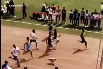 Dog joins 100-meter race, comes in second