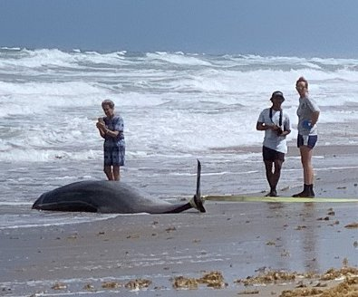 Study: High levels of mercury, plastic toxins found in stranded whales, dolphins