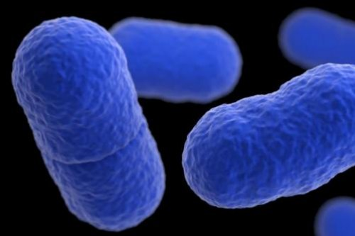 Study shows listeria poses serious miscarriage threat