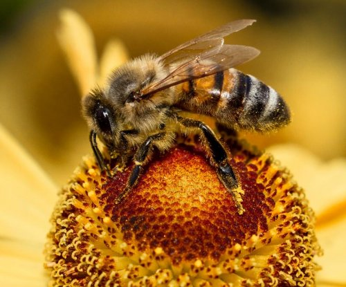 How bees shake their rump: Study explains 'telescoping'