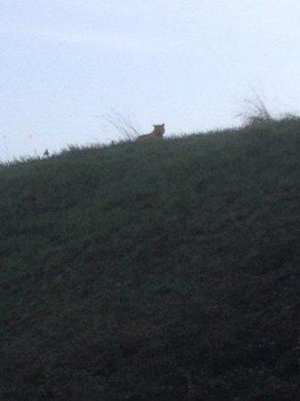 Feline spotted near Paris not a tiger, just a big cat