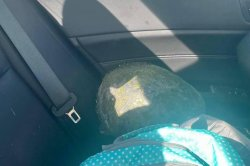 Airborne turtle survives crash through windshield on Florida highway