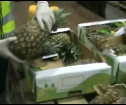 Police seize 1,600 pounds of coke disguised as pineapples