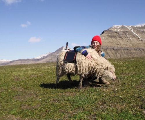 Woman uses sheep to bring Google street view to Faroe Islands