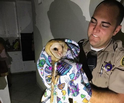 Home-invading owl mistaken for burglar in California