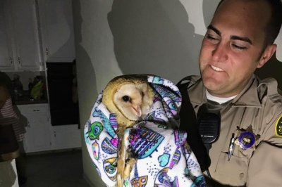 Home-invading owl mistaken for burglar in California