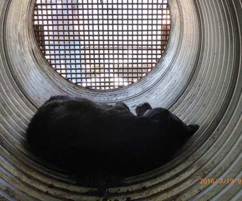 Bear relocated after wandering around Canadian hydro site