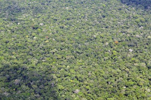 Earth lost nearly 30 million acres of tropical forest last year