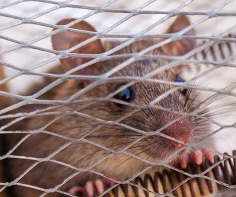 Mouse on a plane delays London to San Francisco flight by four hours
