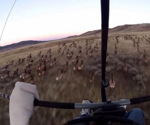 Wyoming man gets probation for harassing elk in viral video
